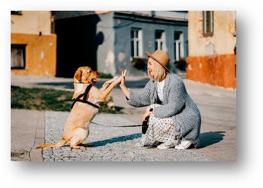 saludo de perro